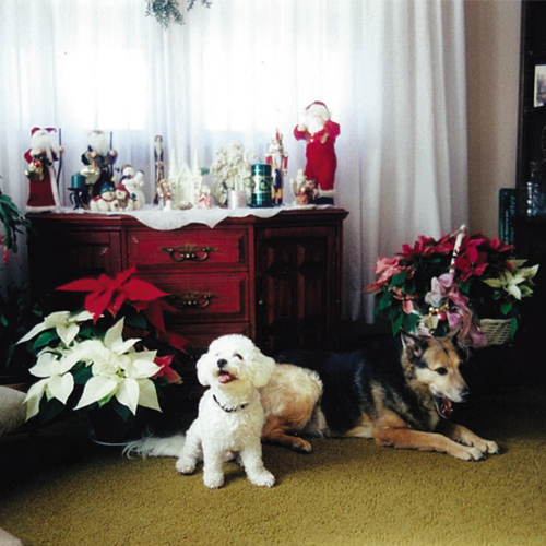 Best Pet Sitting Services in Woburn MA